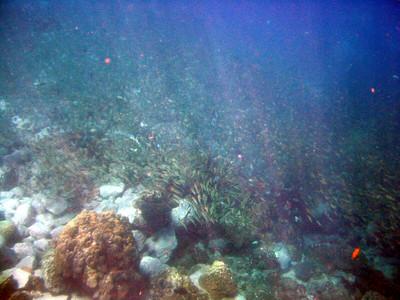 Coral Reef Koh Mak