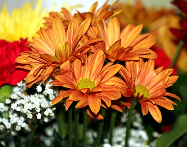 Beautiful flowers to add Color and Warmth to the to the table