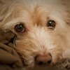 This one's not a Thanksgiving pic, but wanted to try out my new 50mm prime lense. This is a shot of my dog Caleb laying on my bed.