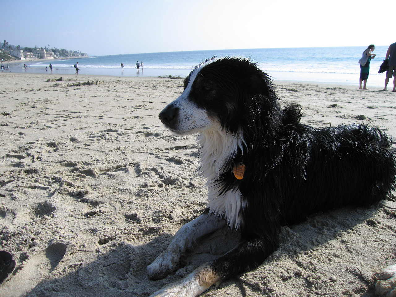 Scout, the diva, on the beach