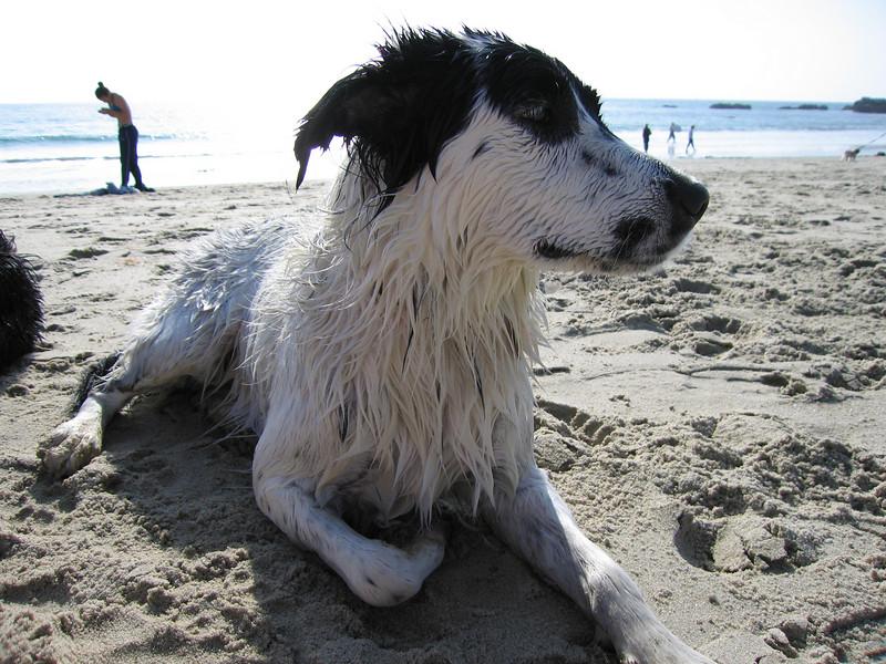 Jett, the tomboy, on the beach
