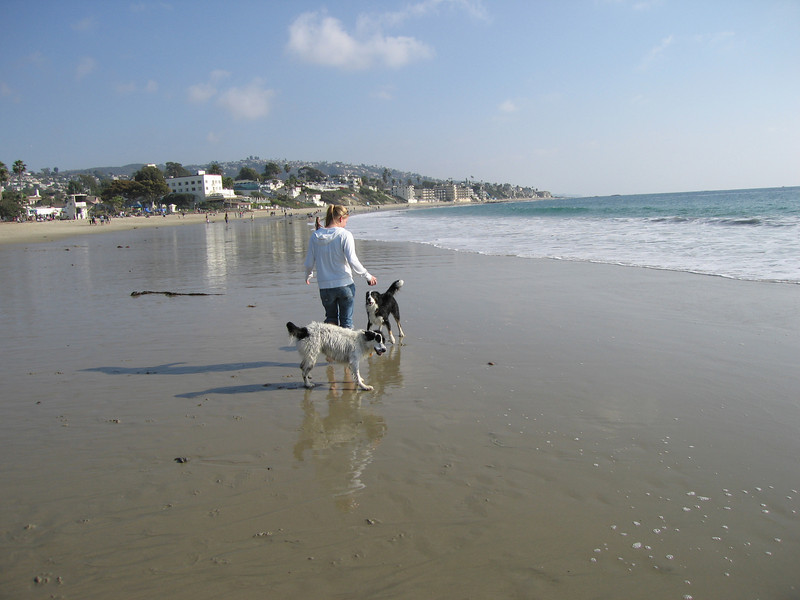 Anne and the dogs on the beach