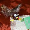 2009 Thanksgiving Day Tucson, AZ
