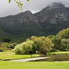 Kirstenbosch Gardens landscape with a cloudy Table Mountain in the background.
