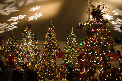 Beautifully Decked Trees