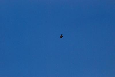 That's a kite.