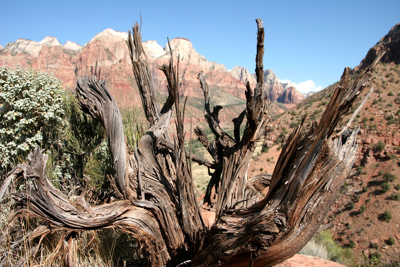 Zion - Watchman Trail 047