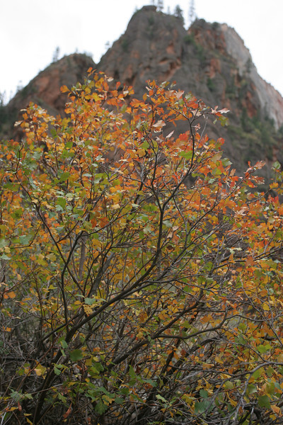 Zion - Weeping Cave 040