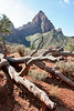 Zion - Watchman Trail 041