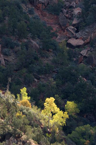 Zion - Watchman Trail 072