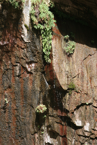 Zion - Emerald Pools Trail - Upper Pools - 007
