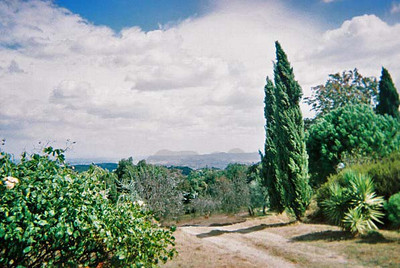 Tuscan scene with poplars