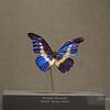 Morpho Butterfly demonstrating the same iridescent sheen as present in rocks.