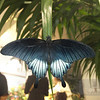 Inside the Butterfly House at the Smithsonian Natural History Museum