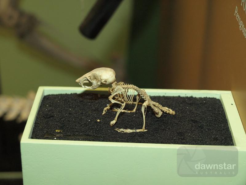 Tiny skeleton