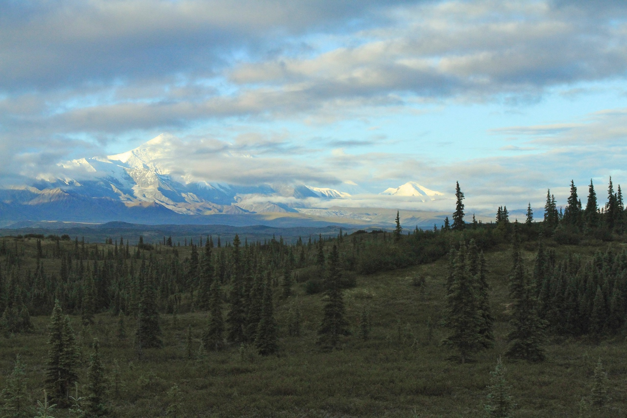 Denali at dawn, Wonder Lake campground