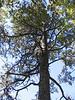 An interesting tree.