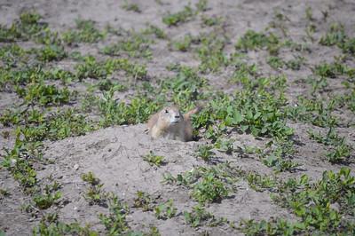 327 - Badlands National Park