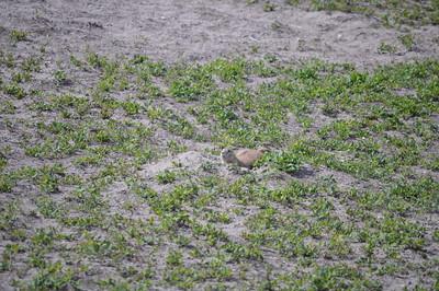 324 - Badlands National Park