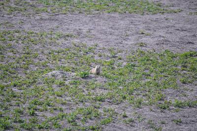 323 - Badlands National Park