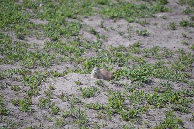 325 - Badlands National Park