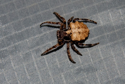 Spider in my Tent the first night