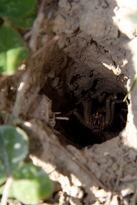 Spider in a hole, scary scary.