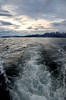 Ushuaia - Harbour and Beagle Channel Tour 150