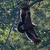 Raptor flight-2