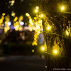 Verrado Tree Lighting Celebration