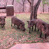 Warthog family at our lodge. They wanted to come inside and hang out with us. Actually they just wanted food.