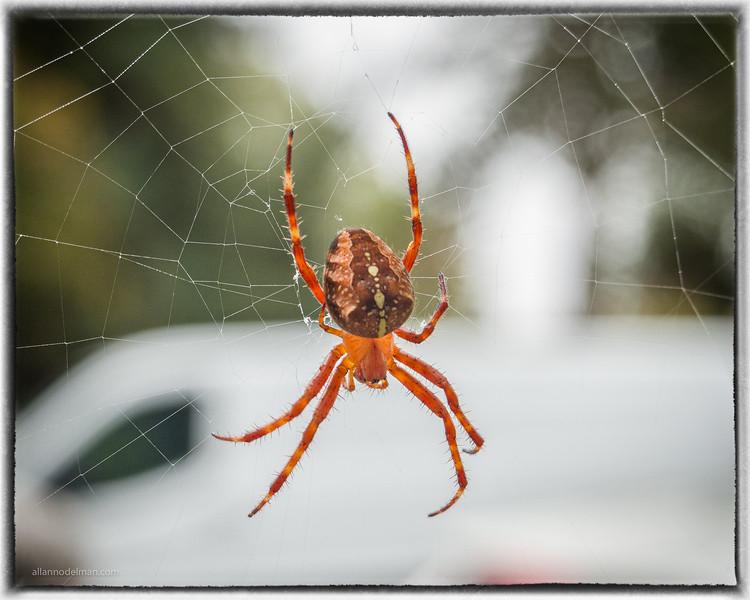 Victorian Spider
