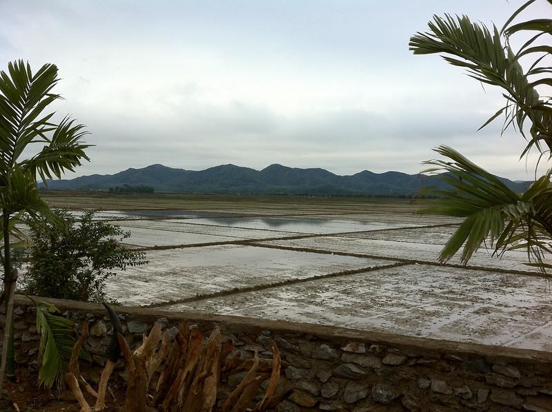 Rice paddies from Phong Nha farmstay.