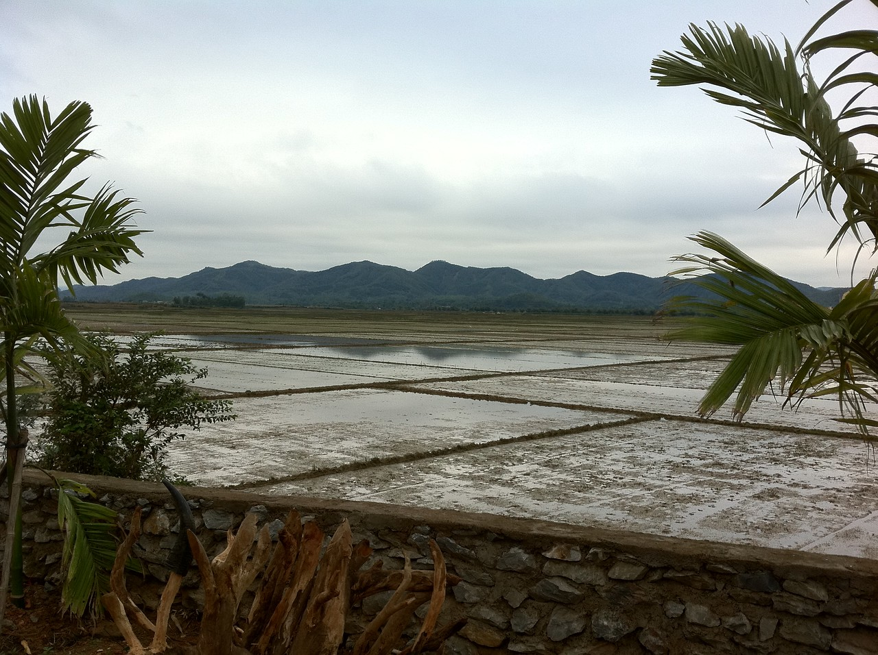 Rice paddies from Phong Nha farmstay.