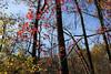 Virginia 2011 - Doyles Falls Trail 102