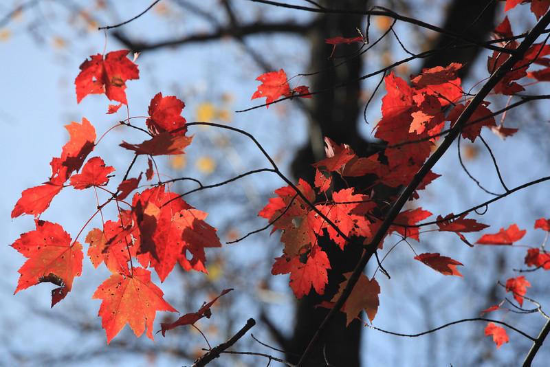 Virginia 2011 - Doyles Falls Trail 106