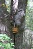 Shenandoah Park - Jones Run Falls Trail 112