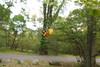Sheandoah Park - South River Falls Hike 44