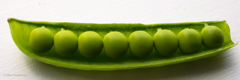 Fresh Organic Peas in a Pod