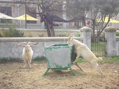 SOUTH AFRICA 2010 - CAPE WINELANDS PAARL & STELLENBOSCH