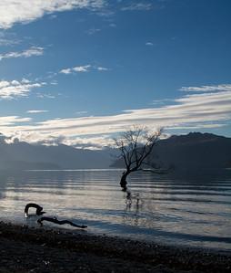 Lone Willow Silhouette Lake Wanaka Jun 2011