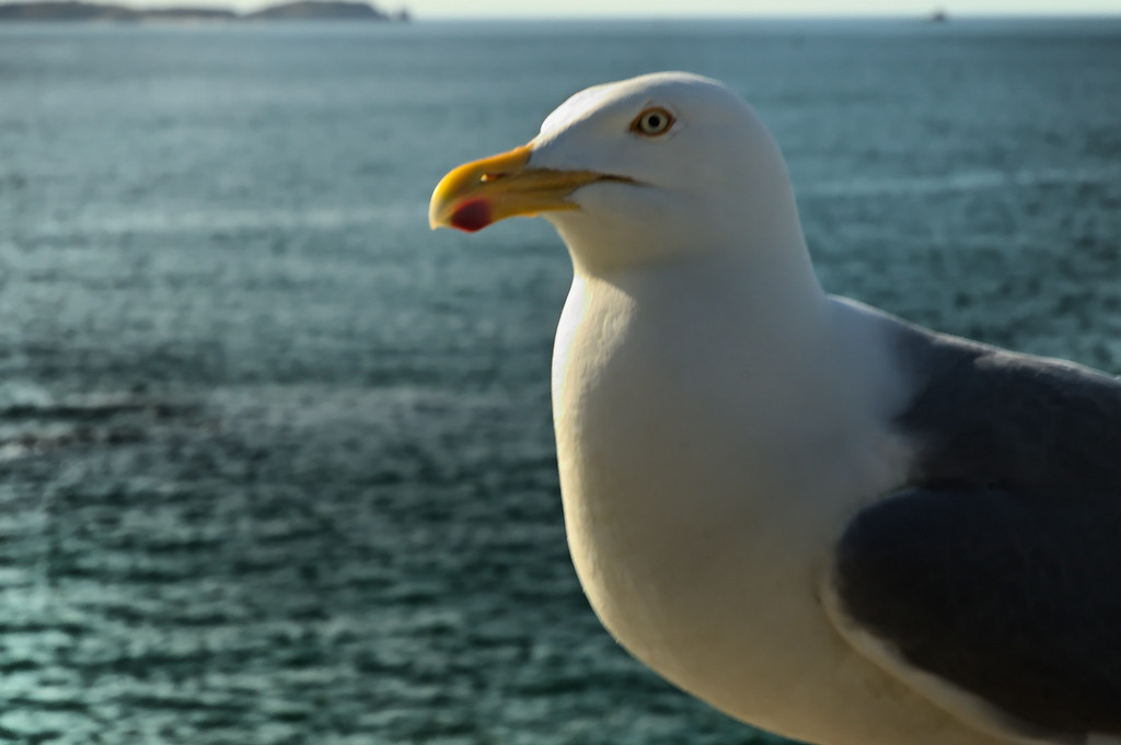 bird !