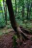 New Hampshire 2014 - The Flume Area 254