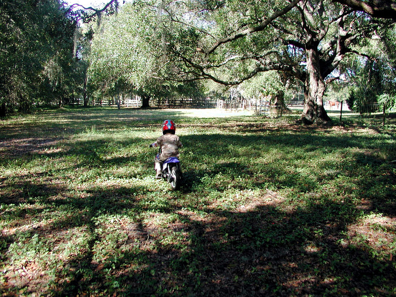 Zach rolls through the shady oaks