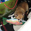 Bruiser got a fishie for xmas from Grandma and Grandpa.