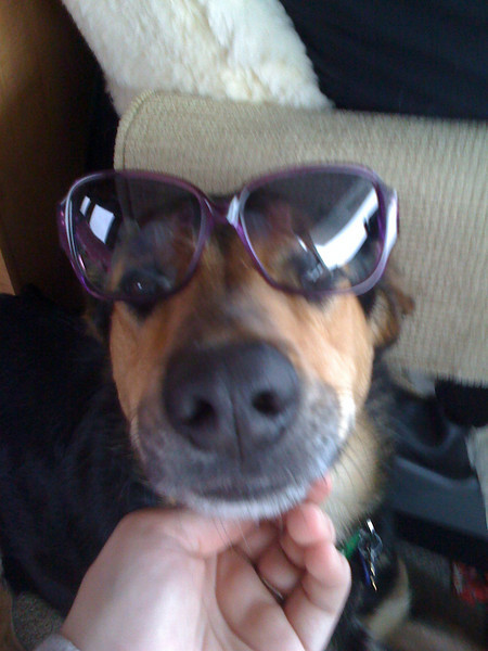 Arnie modeling my new shades