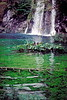 plitvice park - vegetation in pool in front of waterfall