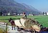 julian alps - valley - farmer in goat cart