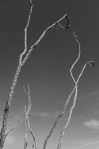 Reaching Ocotillo, Big Bend