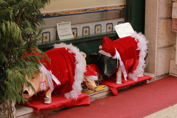 Italy, Verona, Christmas Pigs